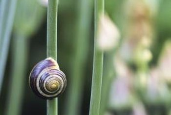 Snails climb foliage using sticky mucus exuded by their foot.