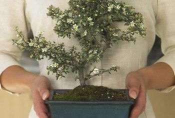 Add miniature trees to your fairy garden to create height.