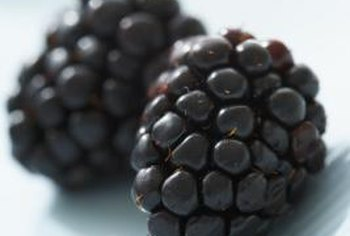 "Proper pruning helps ""Black Satin"" to produce more blackberries."