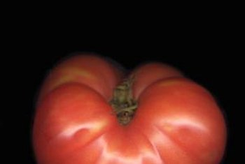 "Some ""Rutgers"" tomato seeds produce determinate plants, others produce indeterminate plants."