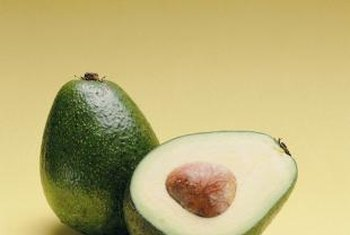 A healthy avocado tree is productive for about 40 years.