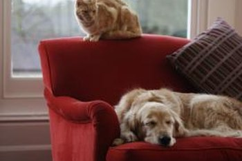 Use treats to encourage your dog off the family sofa and onto the dog sofa.