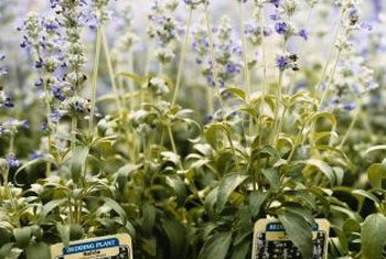 Plant labels help you choose the right plants for your garden.