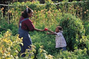 Tomatoes are the most common vegetable grown in gardens across America.