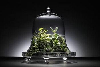 Closed terrariums require minimal maintenance.