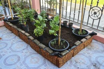 Raised bed vegetable gardens lend themselves to small spaces.