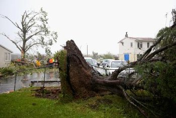 Trees are often uprooted by severe storms and wind gusts.