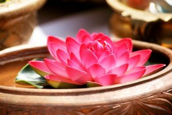 Lotus flowers are typically pink or white.
