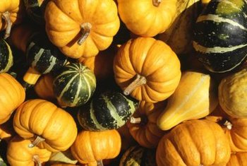 Gourds come in a variety of shapes, colors and sizes.