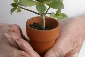 You can grow miniature plants both indoors and out.