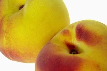 Hale Haven peach trees produce tangy, juicy fruits.