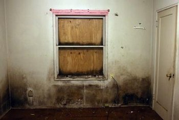 Mold thrives when humidity levels creep above 50 percent.