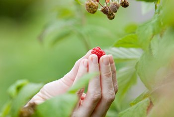 Raspberries are one of several crops that grow well in drier, sandy soil.
