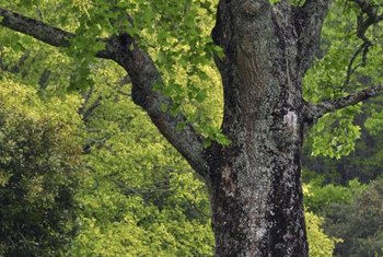 A tree's bark protects its essential systems from environmental attacks.