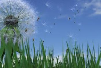 Weeds like dandelions may require a second application.