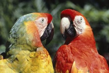 Parrots appreciate a varied diet, including fresh greens, fruits and vegetables.
