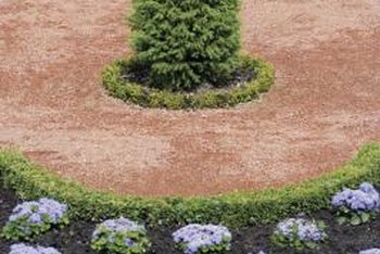 A trimmed arborvitae shrub makes an attractive focal point.