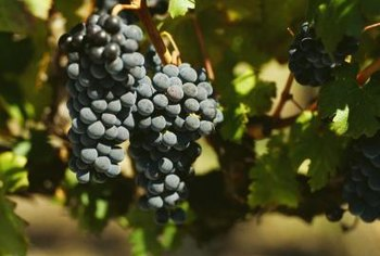 Venus grapes may need fertilizers containing nitrogen, potassium, zinc and boron.