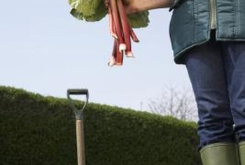 If gardening makes your back ache, it's time to raise the bed off the ground.