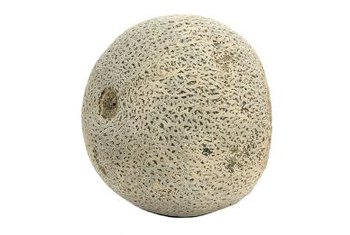 Cantaloupes grown vertically keeps fruit off the ground to reduce the chances of rot and insect infestation.