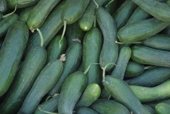 Warm weather allows cucumbers to produce a bountiful harvest.