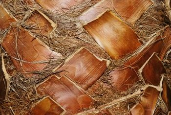Removing the woody ends of old palm fronds reveals a herringbone or diamond pattern.