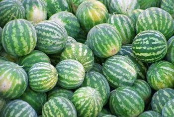 Small watermelons that can be grown vertically are a hit with gardeners.