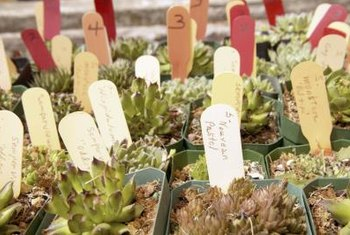 Small succulents make excellent party favors.