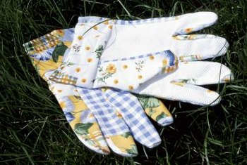Wear gardening gloves to protect your hands from sensitive plant's thorns.