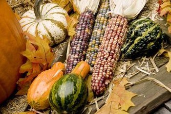 Plant your corn with squashes and beans for a good harvest.