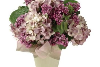Blooming hydrangeas fill out indoor arrangements.