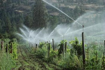 Sprinklers are just one method for continuously watering plants.
