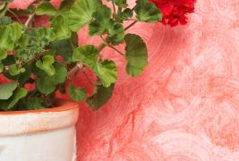 Hang a geranium basket on the side of your sunny porch.