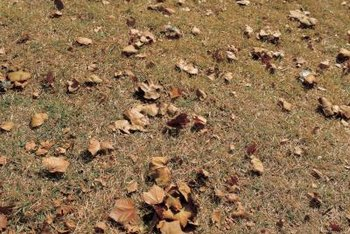 Dry, dead grass in your yard can have several causes.