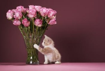 A kitten won't perk up your roses, but warm water will.