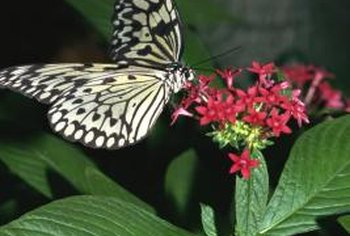 Many flowers possess specific qualities that attract butterflies.