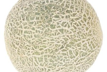 Cantaloupes are related to cucumbers.