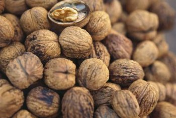 One walnut tree can produce thousands of walnuts.