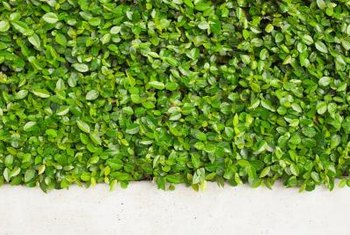 A living wall will freshen the air and add a unique beauty to any wall they grow on.