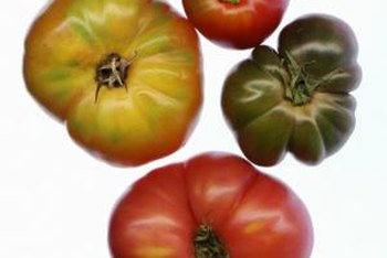 What heirloom tomatoes lack in beauty, they compensate for with dense, richly flavored meat.