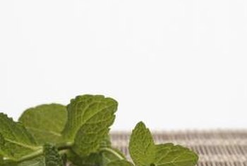 Mint leaves impart flavor and act as a garnish.