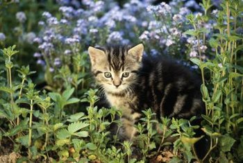 Cats are drawn to loose, bare soil in the landscape.