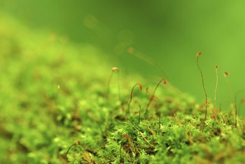 Mosses take advantage of dark, moist conditions that lead to sparse lawn.