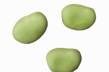 Fava bean plants produce edible seeds in an elongated green pod.