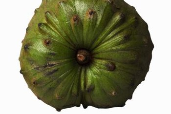 Cherimoya's flavor makes it popular in South America and increasingly farther north.