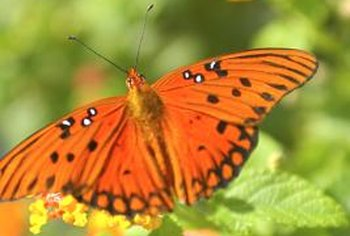 Both butterflies and hummingbirds are attracted to vibrant colors.