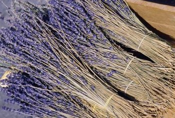 Dried lavender retains most of its aroma and color.