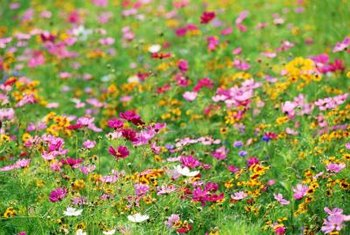 Planting a variety of flowers transforms a rocky hillside into a wildflower meadow.