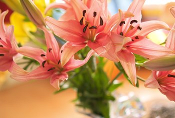 Lilies make excellent cut flowers.