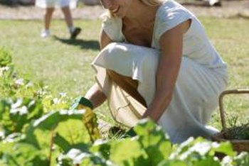 Start with nutrient-rich soil to grow a productive vegetable garden.